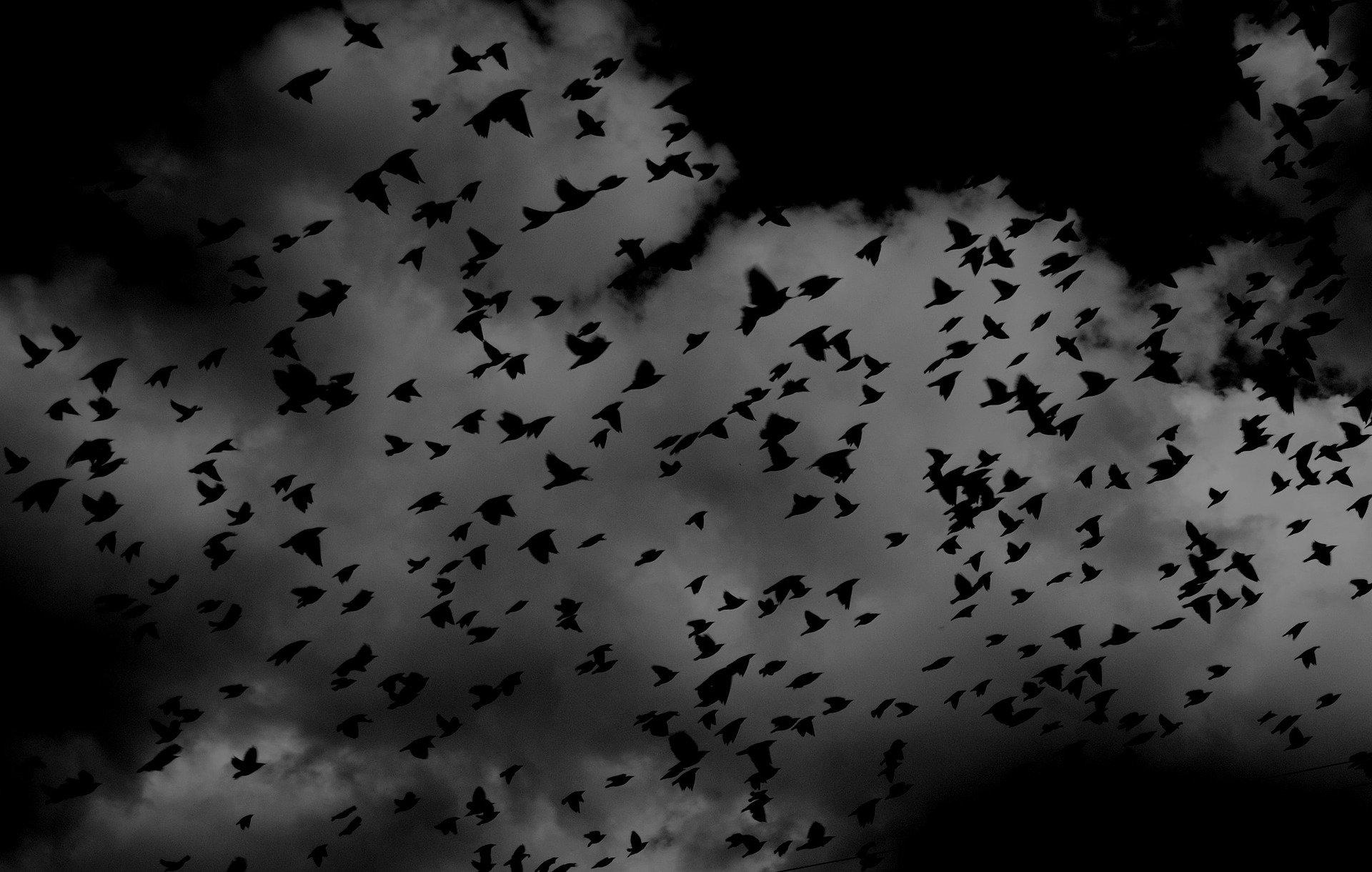 birds-691274_1920